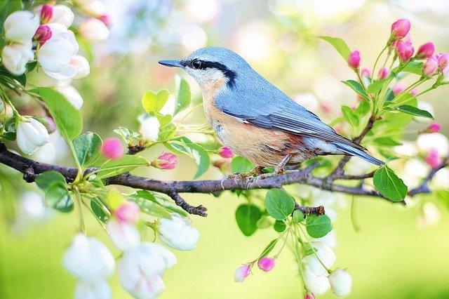 Ptaki, ptaszki i ptaszęta polne